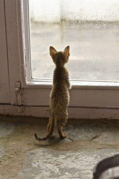 sweet little #kitten