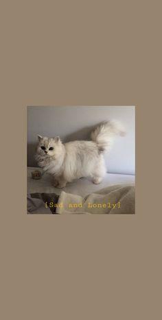 cat wallpaper aesthetic White cat aesthetics wallpaper for you Tier Wallpaper, Cute Cat Wallpaper, Cute Wallpaper Backgrounds, Animal Wallpaper, Cartoon Wallpaper, Cute Wallpapers, Wallpaper Desktop, Aesthetic Pastel Wallpaper, Aesthetic Wallpapers