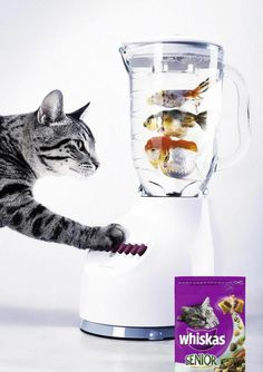 Campanha. Anúncio da Whiskas. Ração para gatos. inspiração. Inspiration Whiskas cat food PD