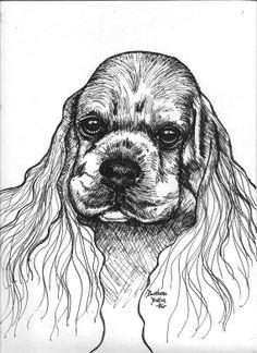 Cocker Spaniel Original Ink Drawing Headstudy by barbarabutler