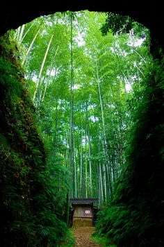 To walk in this verdant place would be like walking in my favorite dream. Bamboo forest at Owase Mie, JapanTo walk in this verdant place would be like walking in my favorite dream. Bamboo forest at Owase Mie, Japan Beautiful World, Beautiful Places, Flora Und Fauna, Design Jardin, Plantation, Shade Garden, Bamboo Garden, Lawn And Garden, Garden Kids