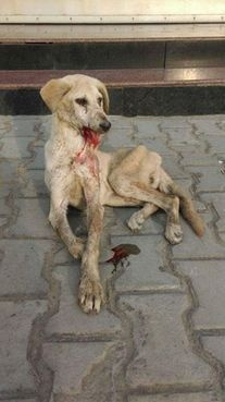 URGENT! DEMAND JUSTICE! Stray Dogs Pounded Repeatedly & Left... - Care2 News Network