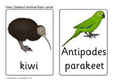 New Zealand animal flash cards