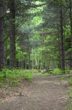 Top 10 List for Selling Your Forestland at a Premium Price!