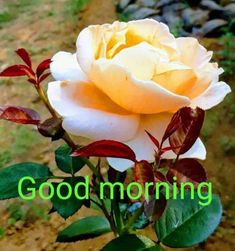 Good Morning Angel, Good Morning Dear Friend, Good Morning Nature, Good Morning Roses, Good Morning Image Quotes, Good Morning Cards, Good Morning Greetings, Morning Quotes, Good Morning Beautiful Pictures