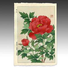 Peony from Shodo Kawarazaki Spring Flower Japanese Woodblock Prints Red Peonies, Flower Artwork, Japanese Flowers, Woodblock Print, Spring Flowers, Poppies, Primitive, Ink, Drawings