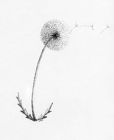 Pointillism Pretty..... :o)   -   http://pelumii.com/yel/wp-admin/network/black-and-white-dandelion-drawing-6613.jpg