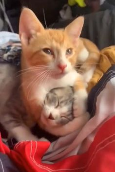 Funny Cute Cats, Cute Baby Cats, Cute Funny Animals, Cute Baby Animals, Kittens And Puppies, Cute Cats And Kittens, Kittens Cutest, Cute Puppies, Cute Animal Videos