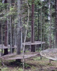 landarch.co Tomografia Drzewa | Roztoczanski Park, Poland by Miroslaw Maszlanko  For the IV Landart Festival in Poland, a series of artist intervene nature through also natural materials, a popular technique as seen in this intervention by Miroslaw is weaving or basketry methods. https://www.instagram.com/p/BHuCc69ATC4/