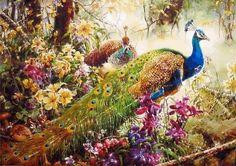 PEACOCK THANK YOU DI51 photo 1-31-12-BIRDS_PEACOCKMIST-450x318-1.gif