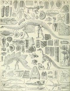 Fossil Chart by bluespecsstudio