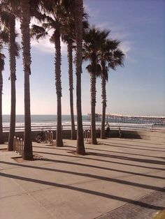 Palm Trees on the Boardwalk, Pacific Beach, San Diego Loved hanging out on the boardwalk. You saw all kinds...LOL