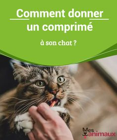 Son Chat, Matou, Nutrition, Cat Health, All About Cats, Dogs, Animaux, Cats