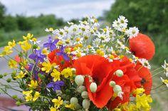 Flores Silvestres, Ramo De Flores, Amapola Roja