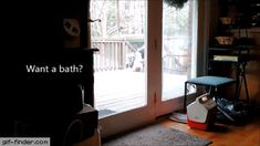 No bath for Daisy | Gif Finder – Find and Share funny animated gifs