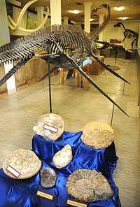 Museum of Geology (South Dakota School of Mines and Technology), Rapid City South Dakota