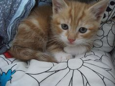 The day we got him :) Now he's a huge, scabby cat! :)