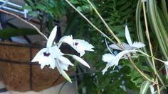 Orquídeas