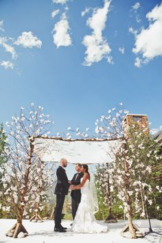 Flowering branches for a chuppah. Photo by Carl Zoch.