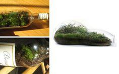 Mini moss ecosystem