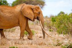 Où dormir dans le parc national Kruger ? - My Wildlife Mombasa, Lonely Planet, Kenya, Parc National Kruger, Safari, Photo Animaliere, Dan, Wildlife, Elephant