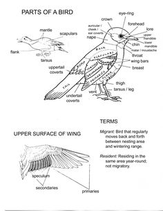 Joanides' Wiki Pages [licensed for non-commercial use only] / Birds 6 Teaching Science, Life Science, Science And Nature, Nature Activities, E Mc2, Environmental Education, Nature Journal, Nature Study, Backyard Birds