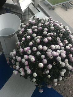 Blueberry, Fruit, Fall, Outdoor Decor, Autumn, Berry, Fall Season, Blueberries