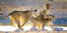 2099 € -- Große Namibia-Rundreise mit Flug, 600 € sparen