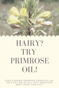 Are you struggling with unwanted body hair and sometimes wonder if you have hirsutism? Evening Primrose Oil might be the solution to your hairy problems! Prim Rose Oil Benefits, Evening Primrose Oil Benefits, Balance Hormones Naturally, Rose Care, Acne Spot Treatment, Female Hormones, Essential Oils For Hair, Acne Spots