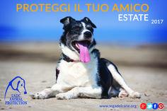 L'estate sta finendo? Non per tutti! Se sei tra i fortunati in partenza ricordati di proteggere il tuo amico a 4 zampe #cani #LNDC