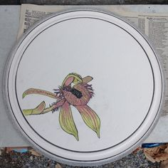 """Bisque fired botanical illustrated plate - West Australian wildflower, """"Dancing Orchid""""   Dianne Collins, Melbourne"""