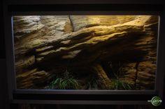 Terrarium plug and play Terrariums Gecko, Leopard Gecko Terrarium, Terrarium Reptile, Succulent Terrarium, Reptile Decor, Reptile Room, Reptile Cage, Reptile Tanks, Tarantula Enclosure