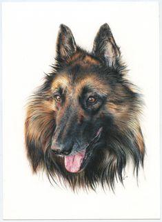 Bergers Belges. Pastor Belga. Illustration pencil. Ilustración lápiz. Dog portrait Corgi, Illustration Art, Animals, Belgian Shepherd, Portraits, Dogs, Greyhounds, Animales, Corgis