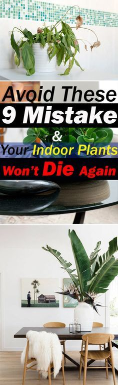 You love growing plants indoors but they die soon (or you kill them)? This won't happen again if you avoid these 9 mistakes!