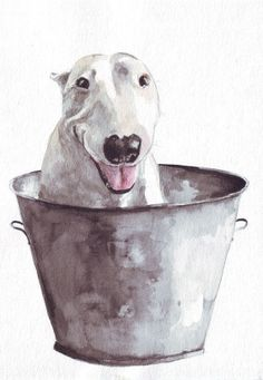 Original dog painting art bull terrier in metal bucket pets If a dog could grin, this one is. Inside his metal bucket, hes happiest and waiting to be Watercolor Art Paintings, Animal Paintings, Painting Art, Watercolors, Photo Animaliere, Bully Dog, English Bull Terriers, Best Dog Breeds, Arte Pop