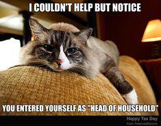 1000 Ideas About Cat Urine Smells On Pinterest Urine