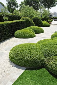 The word topiary is not common among many people. It is simply a way to give proper shape to the hedges and trim them in a perfect manner. This art of giving proper shape to the hedges is quite popular in all over the world. Boxwood Garden, Garden Hedges, Topiary Garden, Garden Paths, Topiaries, Evergreen Garden, Modern Landscaping, Landscaping Plants, Landscaping Ideas