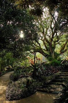 In the Hawaiian Garden - Grounds of Lyon Arboretum