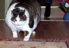 Cat funny gif.