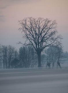 Foggy dawn in Arlesega, in the Paduan countryside, Italy