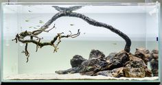 I quickly set up a hardscape-only aquarium using a dead pinus sylvestris bonsai, some petrified wood and sand. It is primarily for testing if (and how) such a setup can be kept clean. These look super-simple, but I am afraid they are not :) We'll...