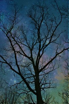 """Galaxy"" by Stephanie G. James uses the background to bring beauty to an ordinary tree."