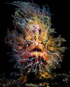 #aspasiadive #dive #diving #scubadive #scubadiving  #tauchen #plongee #buceo #buceadores #diver #buceo #inmersion #like4like #submarinisme #submarinismo #ocean #sealife #underwaterphotography #fotosub #busseig #reef #arrecife #underwater