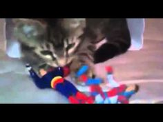 BEST Funny Videos 2014 Funny Cats Video Funny Cat Videos Ever Funny Animals Funny Fails 2014 2 4 - http://positivelifemagazine.com/best-funny-videos-2014-funny-cats-video-funny-cat-videos-ever-funny-animals-funny-fails-2014-2-4/ http://img.youtube.com/vi/8zE-9reRuXk/0.jpg  Collectaion Funny animals video that shows a range of hilarious clips of animals doing crazy things,Funny Kids, Funny Animals Compilation. Judy Diet Programme ***Start your own website with USD3.9 per mon
