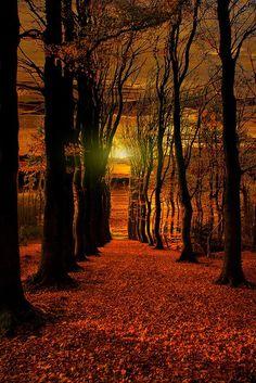 The Red Forest, Gelderland, The Netherlands