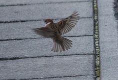 鳥の羽ばたき、雨あがりの花 - ピコ父