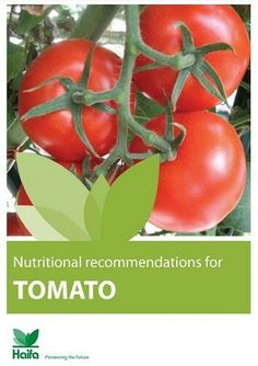 Tomato crop guide – get the most of your tomato fertilizer