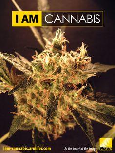 #Nikon #PWND Cannabis, Nikon, Image, Ganja