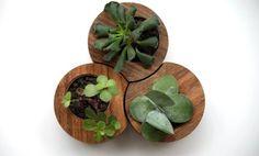 TECO | Mais um TRIO PARADA DURA para curtir! Vasos em madeira certificada, respeito à natureza.