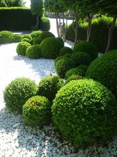 Balls from Topiary in a modern, minimalist garden design - Garten Design - # Modern Landscaping, Outdoor Landscaping, Front Yard Landscaping, Outdoor Gardens, Landscaping Ideas, Boxwood Landscaping, Modern Gardens, Backyard Ideas, Modern Garden Design